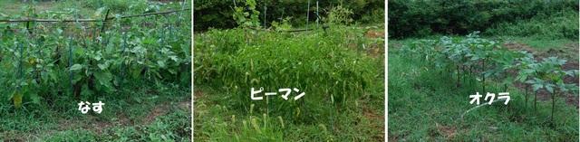 野菜3品.jpg